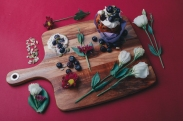 A editorial shot of a muffin, cream, berries, seeds and flowers placed on a red background.