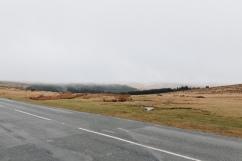 dartmoor_15